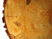 Текстура древесины отрезала вниз с изолированной сосны дерева Стоковое фото RF