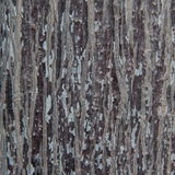 Текстура древесины расшивы Стоковые Фото