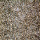 Текстура древесины расшивы Стоковые Изображения RF