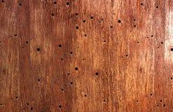 Текстура древесины червя Стоковые Фотографии RF