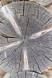 Текстура древесины Стоковое Фото
