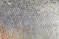 Текстура рыб Pacu Стоковые Изображения RF
