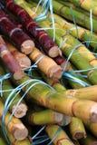 текстура сахарного тростника как славная естественная предпосылка Стоковое Изображение RF