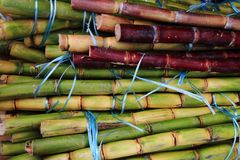 текстура сахарного тростника как славная естественная предпосылка Стоковая Фотография