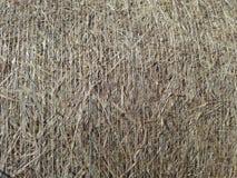 Текстура связки сена Стоковые Изображения RF