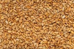 Текстура семян подсолнуха стоковые изображения
