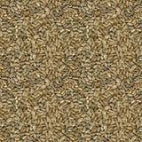 Текстура семян подсолнуха безшовная Стоковое фото RF