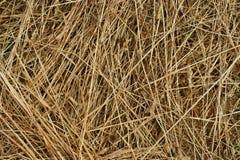 текстура сена предпосылки Стоковое Фото