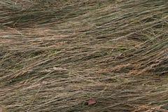 текстура сена Стоковое Фото