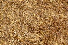 Текстура сена стоковая фотография