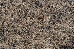 Текстура сена Стоковая Фотография RF