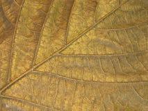 Текстура серебряных листьев Стоковые Фотографии RF