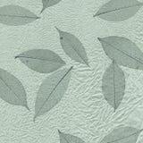 текстура серии листьев Стоковая Фотография RF