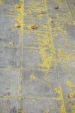 Текстура серой каменной мостоваой с желтым цветком Стоковые Изображения