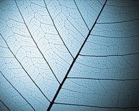 текстура скелета листьев Стоковая Фотография