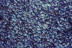 текстура солнцецвета семян предпосылки черная Стоковое Изображение