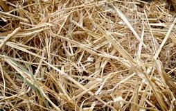 Текстура соломы, предпосылка, работа фермы Стоковые Фото
