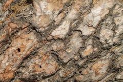 текстура сосенки расшивы Стоковая Фотография
