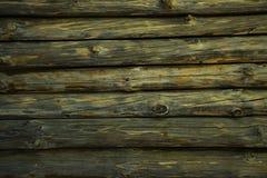 Текстура соснового леса стоковое изображение rf
