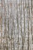 Текстура старой и worn коры дерева Стоковые Изображения
