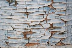 Текстура старой треснутой покрашенной древесины голубой Старая, треснутая краска в шелухе Стоковое Фото