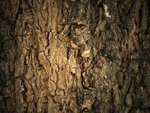 Текстура ствола дерева стоковое изображение