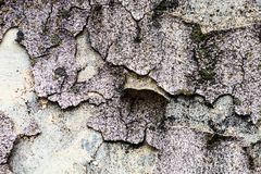 Текстура стены с мхом и треснутыми гипсолитом и побелкой Стоковое Фото
