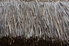 текстура сторновки предпосылки близкая вверх Текстура сторновки Стоковые Фото