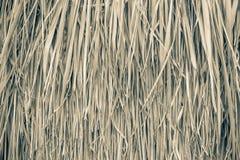 текстура сторновки предпосылки близкая вверх Текстура сторновки Стоковая Фотография RF