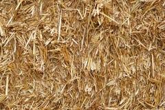 текстура сторновки сена предпосылки Стоковое Изображение