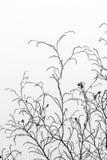 Текстура сухих хворостин с ясными голубым небом и луной в backgro Стоковое Фото