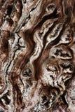 Текстура сухого дерева Стоковые Изображения