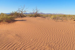 Текстура сухой почвы пустыни красная стоковая фотография rf