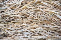 Текстура сухой старой травы Стоковые Фотографии RF