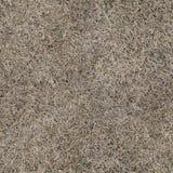 Текстура сухой травы безшовная Стоковое Изображение RF