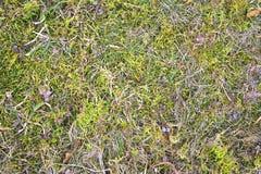 Текстура сухой травы Стоковые Изображения