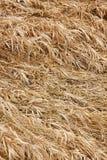 текстура сухой травы Стоковые Изображения RF