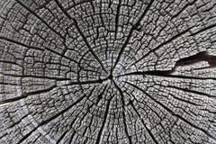 Текстура тимберса Стоковые Фотографии RF