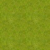текстура травы безшовная Стоковое Фото