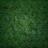 Текстура травы вектора Стоковые Изображения RF