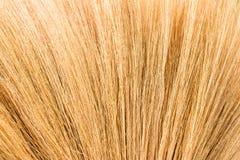 Текстура травы веника Стоковые Фото