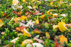 текстура травы и листьев Стоковое Фото