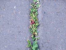 Текстура травы и цветков на реке Стоковая Фотография