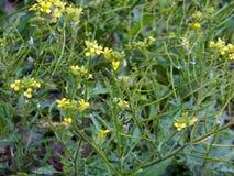Текстура травы и цветков Стоковые Изображения