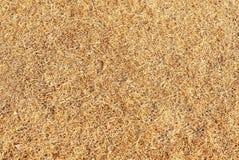 Текстура травы мертвая Стоковое Фото