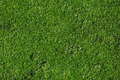 Текстура травы наймов Стоковые Изображения