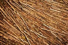 текстура травы осени Стоковая Фотография