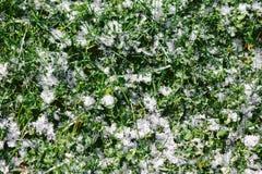 Текстура травы покрытая с снегом Стоковая Фотография