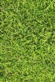 текстура травы поля Стоковые Фотографии RF
