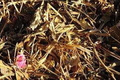 Текстура травы сухой травы Брайна Стоковое Фото
